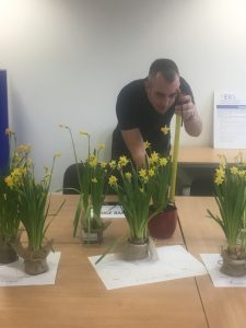 EBS Daffodil growing competition 2017: Serious measuring!